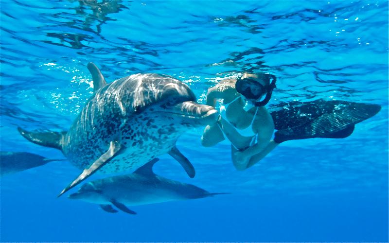 Delfin Ausflug Hurghada Memnon Reisen
