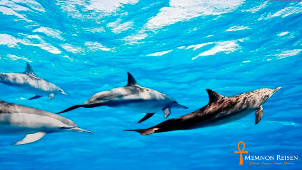 Delfinschwimmen Hurghada - Hurghada Delfine