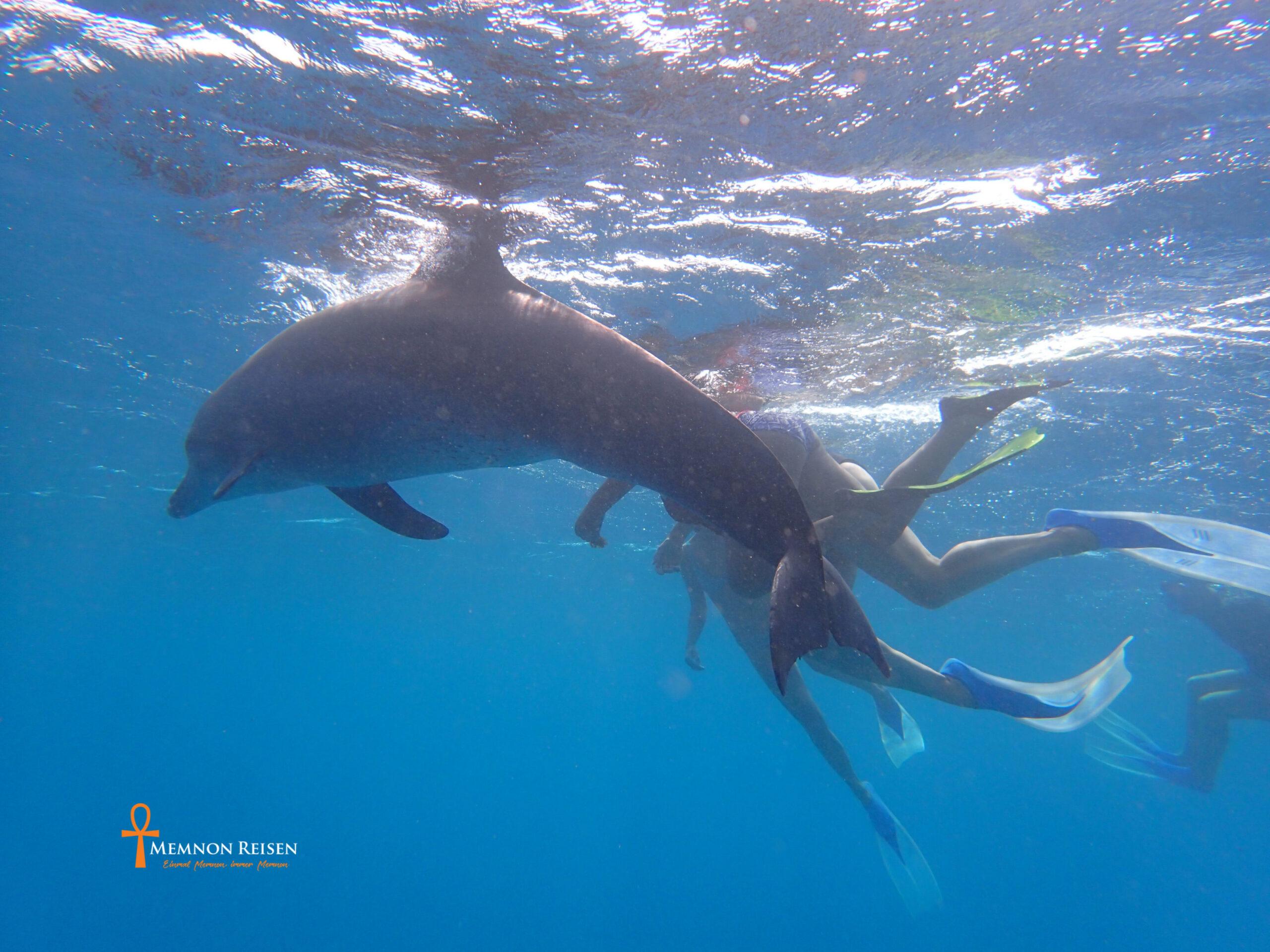 Tanz der Delfine in Hurghada 2 Tage mit Übernachtung