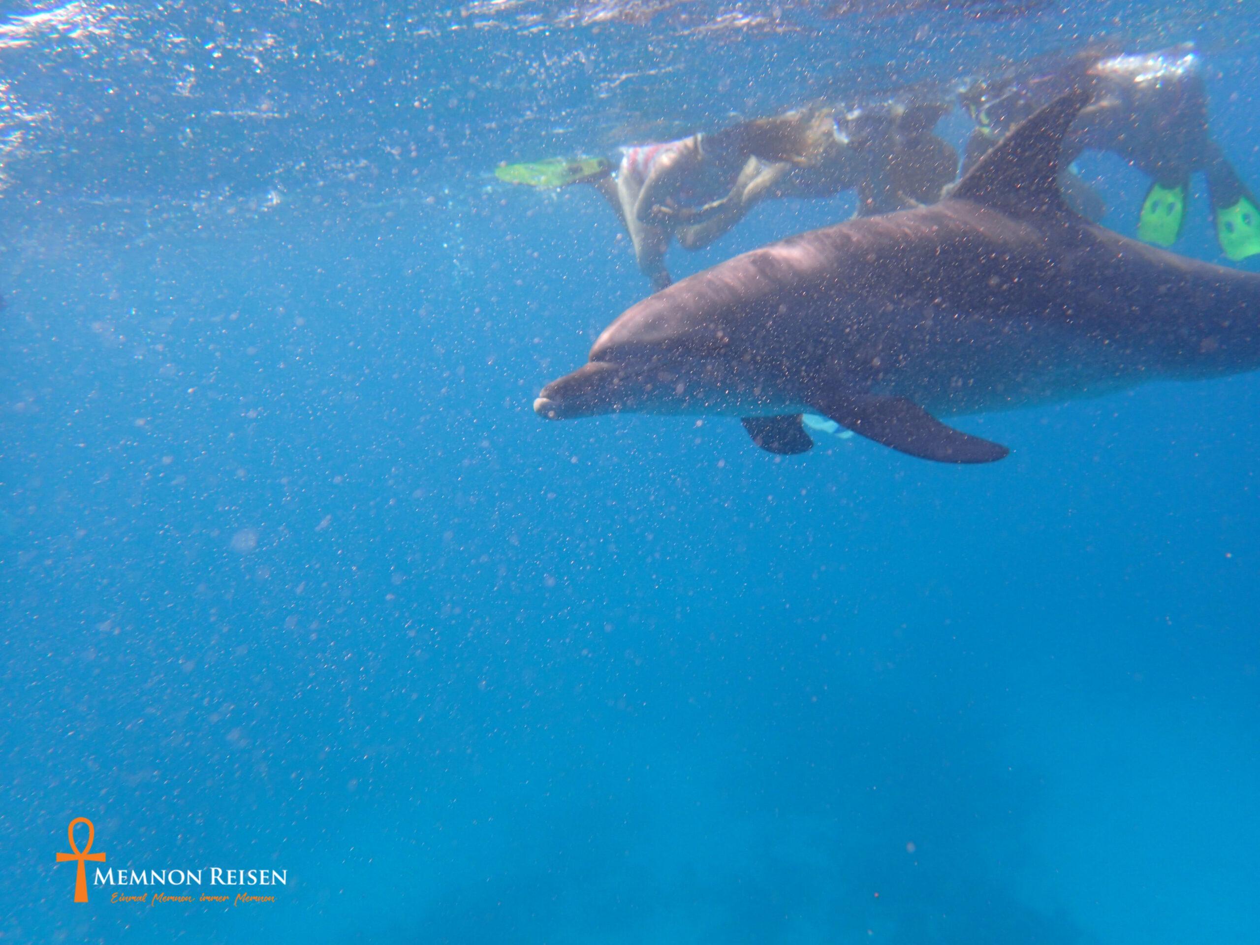 Mit Delfinen schwimmen-Privat